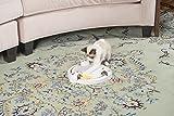 PetSafe Pounce Pet Toy
