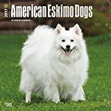 American Eskimo Dog Wall Calendar 2017 {jg} Best Holiday Gift Ideas - Great for mom, dad, sister, brother, grandparents, , grandchildren, grandma, gay, lgbtq.