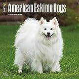 Cute American Eskimo Calendar Dogs 2017 {jg} Best Holiday Gift Ideas - Great for mom, dad, sister, brother, grandparents, grandchildren, grandma, gay, lgbtq.