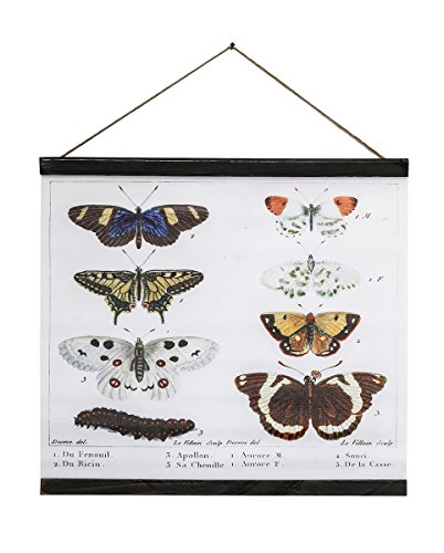 Agency Avenue Canvas Art Vintage Scientific Illustration Poster Print Biology Reference Butterfly and Caterpillar Chart Wall Banner with Wooden Rails (21.5