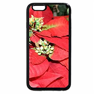 iPhone 6S / iPhone 6 Case (Black) Poinsettia as a symbol