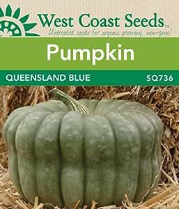 Pumpkin Seeds - Queensland Blue