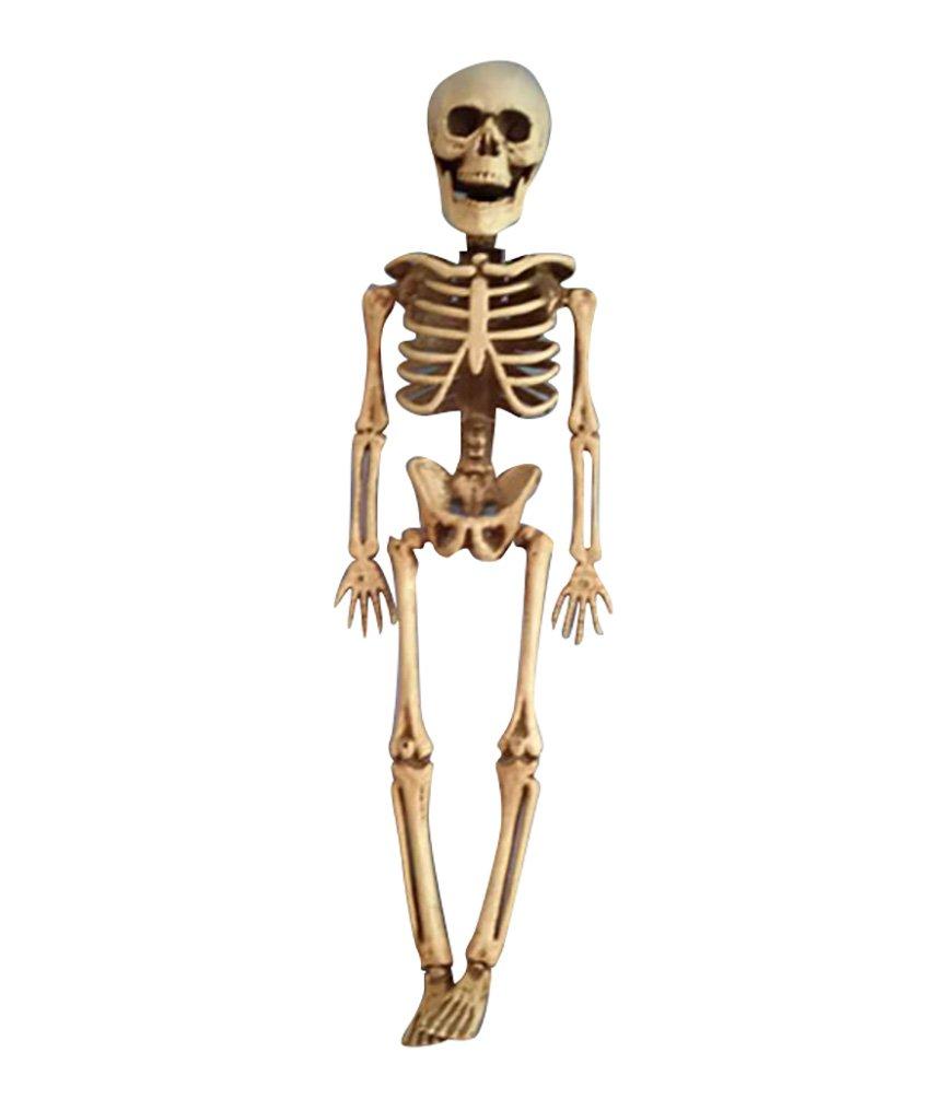 Berühmt Mensch Zurück Skelett Galerie - Menschliche Anatomie Bilder ...