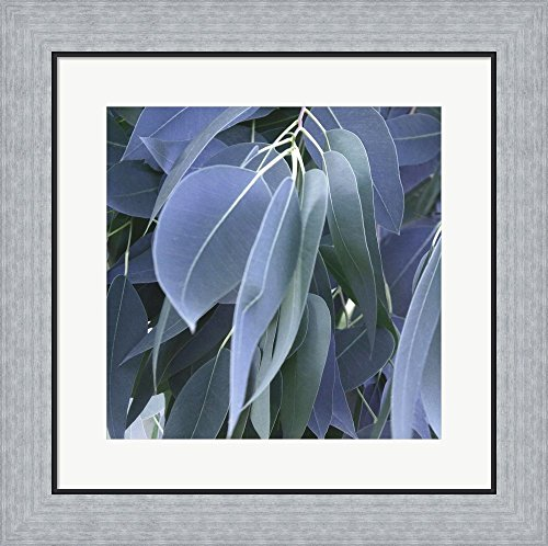 - Eucalyptus Leaves by Jan Lens Framed Art Print Wall Picture, Flat Silver Frame, 19 x 19 inches