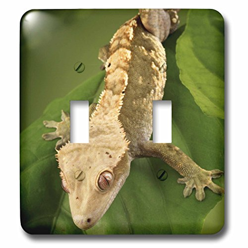 3dRose lsp_84105_2 New Caledonian Crested Gecko Lizard Na02 Mpr0086 Maresa Pryor Double Toggle Switch