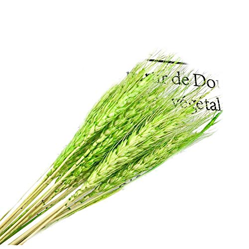 (Clear Fayer 50 Pcs/Lot Dry Grass Bouquet Decoration Wedding Flower Bouquet Wedding High Simulation Dry Wheat,Wheat Bundle,Stalk,Naturally Dried Flowers for Home Party Decorations (Green))