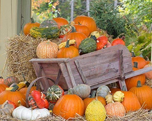 Image result for beautiful Autumn images