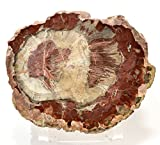 4.6'' Red Petrified Wood Slab Natural Fossilized Tree Mineral Slice Collectible Fossil Crystal Polished Stone - Madagascar