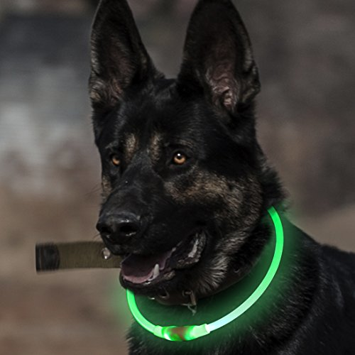 BSeen LED Dog Collar, USB Rechargeable, Glowing Pet Dog Collar for Night Safety, Fashion Light UP Collar for Small Medium Large Dog (Neon Green)