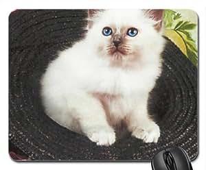 A Birman kitten in a straw hat Cute Cool Decorative Design Animal Cat Mousepad Rainbow Designs