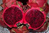 Promotion!!! 40seeds the rare red pitaya seeds, very delicious fruit seeds dragon fruit seeds