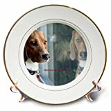 3dRose Russell Foote Photography-Dogs - Beagle looking out the window for his human - 8 inch Porcelain Plate (cp_281492_1)