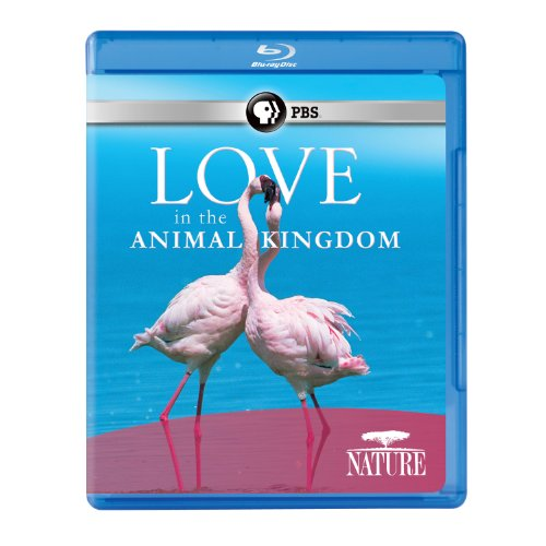 Nature: Love in the Animal Kingdom [Blu-ray]