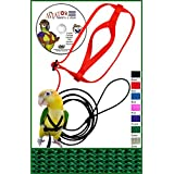 The AVIATOR Pet Bird Harness and Leash: X-Small Green