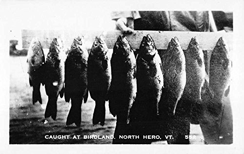 (North Hero Vermont Birdland Fish Catch Real Photo Antique Postcard K86966)