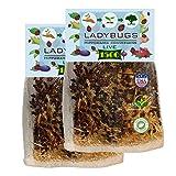 Clark&Co Organic 3000 Live Ladybugs - Good Bugs