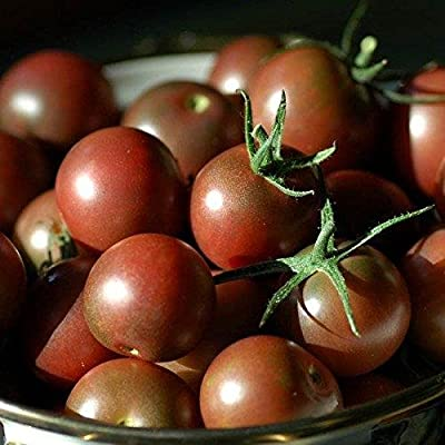 Chocolate Cherry Tomato Seeds - 20+ Rare Non-GMO Organic Heirloom Vegetable Garden Seeds in FROZEN SEED CAPSULES for The Gardener & Rare Seeds Collector - Plant Seeds Now or Save Seeds for Years : Garden & Outdoor