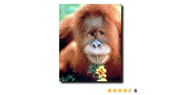 Canvas Print Wall Art Painting 5Pcs,Cute Animal Orangutan In The Rain,Poster And Prints Modular Wall Picture,Home Decor Art Photographie Murals Picture Print Photo Wall For Living Room,Bedroom,Hotel,