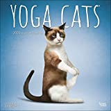 Yoga Cats 2020 12 x 12 Inch Monthly Square Wall Calendar, Animals Humor Cat