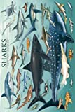Safari LTD Sharks Laminated Poster
