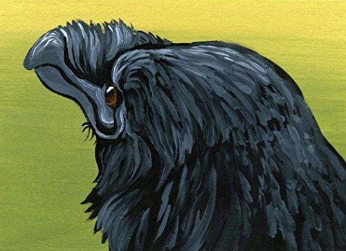 Aceo Bird - ACEO Miniature Raven Crow Bird Painting Wildlife-Carla Smale