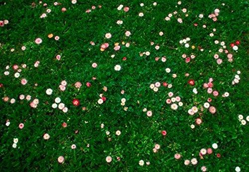 2 kg Daisy & Clover Heritage Lawn Grass Seed Cottage garden hard wearing 2kg pretty wild seeds