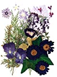 Beautiful pressed flowers mixed, pansy, star flower, torenia, marguerite, alyssum, lobelia, foliage for floral art, craft, scrapbooking