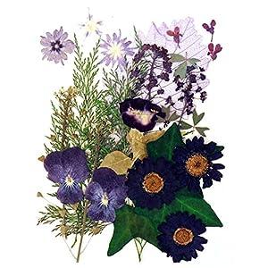Silver J Pressed flowers, star flower, alyssum, pansy, marguerite, torenia, lobelia, ivy foliage 102