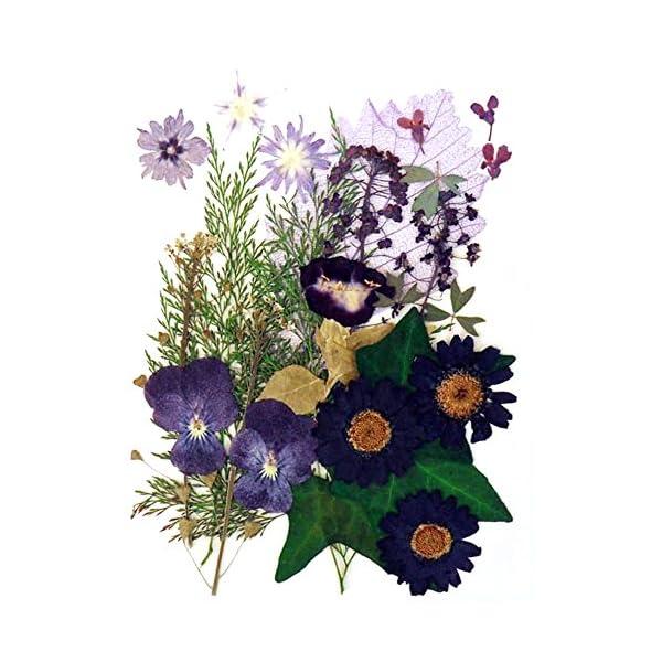Silver J Pressed flowers, star flower, alyssum, pansy, marguerite, torenia, lobelia, ivy foliage
