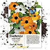 Seed Needs, Black Eyed Susan Vine Mix (Thunbergia alata) 100 Seeds