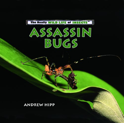 Assassin Bug (Assassin Bugs (Really Wild Life of Insects))