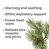 Plant Therapy Pine Scots Essential Oil 10 mL