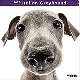 THE DOG Wall Calendar 2017 Italian Greyhound