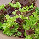 Zoomy Far: Lettuce MISTICANZA Seeds (AVG 30-50) Seeds X 1 Packet