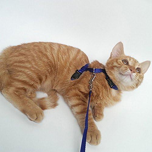 Harnais et collier à laisse pour chat et petit animal de compagnie par Bodhi2000 - Réglable et nylon