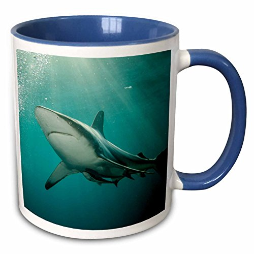 3dRose Danita Delimont - Sharks - Oceanic Black-tip shark and Remora, KwaZulu-Natal, South Africa - 15oz Two-Tone Blue Mug (mug_225123_11)