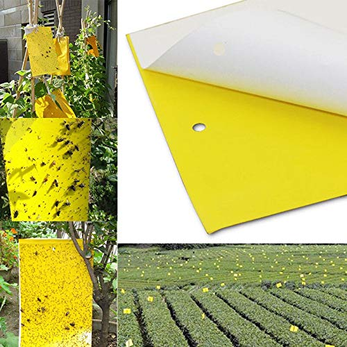10 20 50PCS YEL Sticky Insect Traps (25x15cm) Catch Flying Greenhouse Pests Control Strong Flies Traps Bedbugs Sticky Board   20pcs