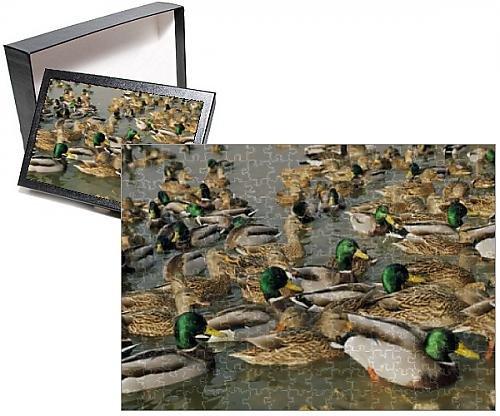 photo-jigsaw-puzzle-of-mallard-duck-flock-on-water