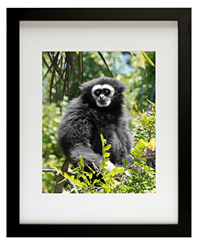 Photo Glass Picture Frame (Golden State Art, Simple and Stylish Picture Frame with Ivory Color Mat & Real Glass (11x14, Black))