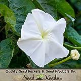 "10 Seeds, Moonflower ""Night Bloomers"" (Ipomoea alba) Packaged By Seed Needs"
