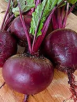 Beets, Ruby Queen Seeds , Organic, NON-GMO, 75 seeds per package,Ruby Queen beet's round red roots have a smooth buttery texture that pleases the tongue. Jacobs Ladder
