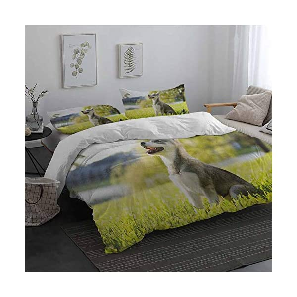 GLDirect Alaskan Malamute Duvet Cover Size 3 Piece Klee Kai Puppy Sitting on Grass Looking Up Friendly Young Cute Animal Extra Soft Deep Pockets Multicolor Queen Size 1