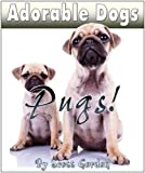 Adorable Dogs: Pugs (Hilarious!)