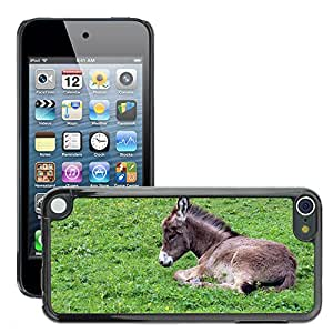 Super Stella Slim PC Hard Case Cover Skin Armor Shell Protection // M00146276 Donkey Donkey Foal Foal Baby Animal // Apple ipod Touch 5 5G 5th