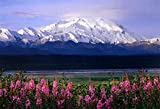Denali National Park Poster, Wildflowers, Alaska, Mount Mckinley, the High One