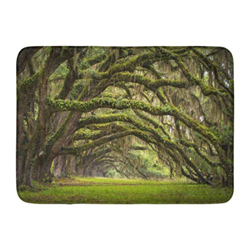 - Doormats Bath Rugs Mat Oaks Avenue Charleston Sc Plantation Live Trees Landscape in Ace Basin South Carolina Lowcountry Rug 23.6