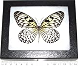 Bicbugs, LLC REAL FRAMED BUTTERFLY WHITE BLACK IDEA INDONESIA