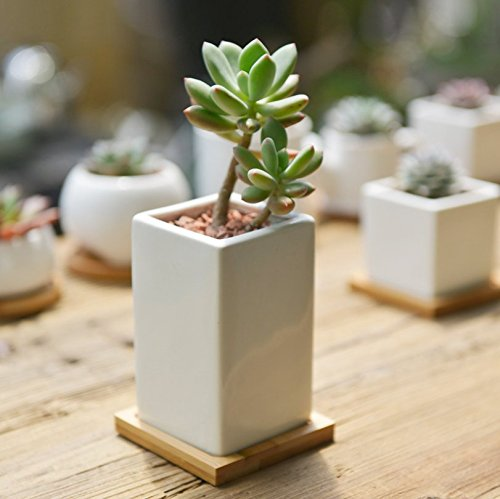 sun-e-modern-white-ceramic-succulent-planter-pots-mini-flower-plant-containers-with-bamboo-saucers-h