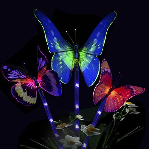 Butterfly Led Lights in Florida - 7