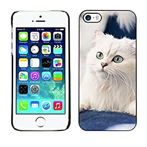 All Phone Most Case / Hard PC Metal piece Shell Slim Cover Protective Case for Apple Iphone 5 / 5S White American Curl Norwegian Cat